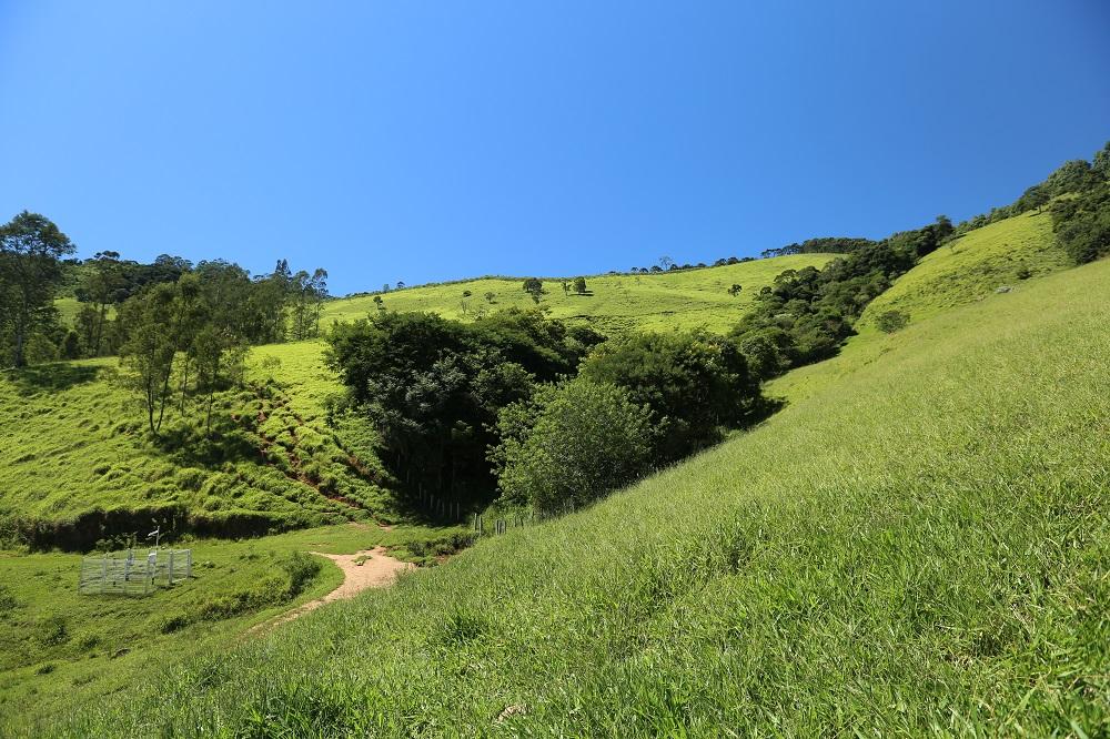 La foto muestra un valle de vegetación y pasto verde claro, con algunos arbustos y árboles dispersos. Al fondo, el cielo azul sin ninguna nube.