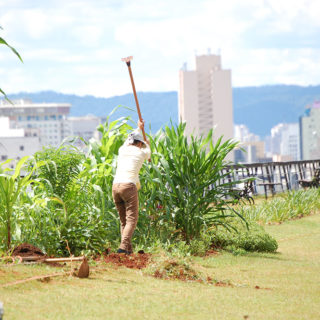 In the center of the photo a person with their back to the camera is raising a hoe above their head, facing some tall plants. The plants and person are about the same height. The person is wearing a white bandana on their head, an off-white long sleeve shirt and light brown pants. There is a short light green lawn around the plants. In the background is a low railing, indicating that the place is above the streets, and beyond it are various buildings and a hill in the horizon.