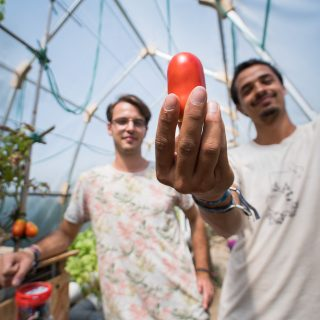Two young men are looking at the camera. The one on the right holds up a tomato in his left hand. They are wearing white t-shirts with prints on them, their image is out of focus. In the back is a glass ceiling and, on the left corner of the photo, some tomato plants bearing fruit.