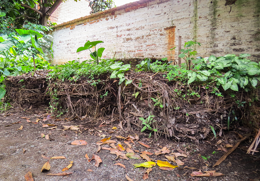 Bales of earth stacked in a row are covered by small plants growing on top. In the back is a stained white brick wall. Closer to the camera is a dark dirt ground.