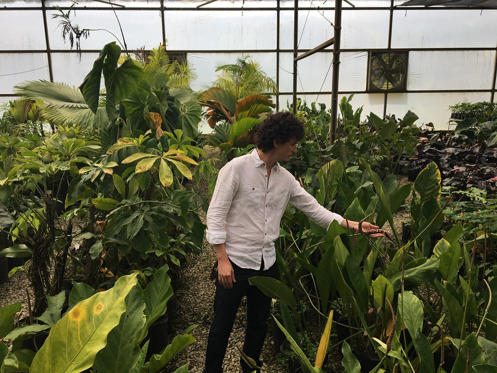 A man, his body facing the camera, looks to the right side of the photo while reaching out with his left arm to touch a large leaf. He is in the middle of a garden full of tall leaves, close to chest height, that sprout from the ground. The man has white skin and short, wavy brown hair. He is wearing a white shirt and black pants.