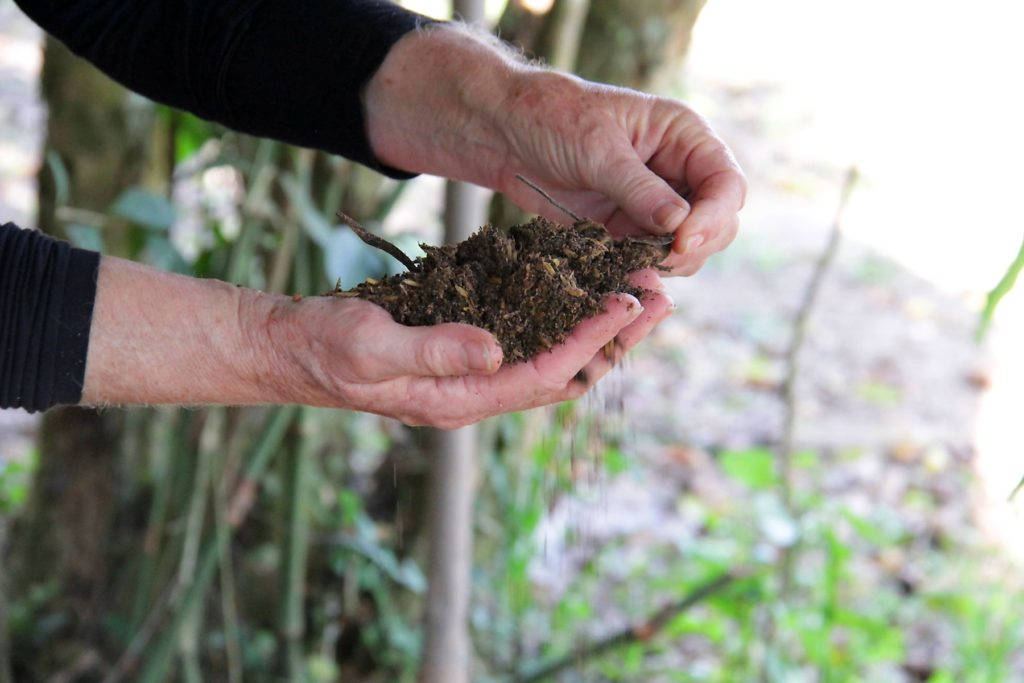 The hands of an old white person are holding some black dirt. This person is wearing a black, long sleeved shirt. In the back are some branches and dirt ground seen out of focus.