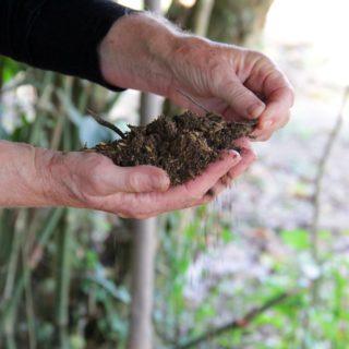 Las manos de una persona mayor de piel blanca sostienen un puñado de tierra oscura. La persona lleva una camiseta de manga larga negra. Al fondo, tallos y ramas sobre la tierra, desenfocados.