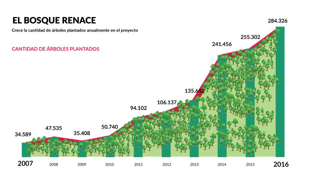 """Un gráfico de barras ascendente muestra el crecimiento de la cantidad de árboles plantados en el proyecto, durante el periodo entre los años 2007 y 2016. En el extremo superior izquierdo de la imagen está el título: """"El bosque renace"""", en mayúsculas, y el subtítulo """"Crece la cantidad de árboles plantados anualmente en el proyecto"""", en letras negras. Justo debajo, en letras rojas mayúsculas, está escrito """"Cantidad de árboles plantados"""". El gráfico tiene tonos verdes y está relleno con ilustraciones de árboles. Los números son los siguientes: 34.589 en 2007, 47.535 en 2008, 35.408 en 2009, 50.740 en 2010, 94.102 en 2011, 106.137 en 2012, 135.642 en 2013, 241.456 en 2014, 255.302 en 2015 y, por último, 284.326 en 2016. En el extremo inferior izquierdo está la fuente de información: Secretaría de Medio Ambiente de Extrema."""