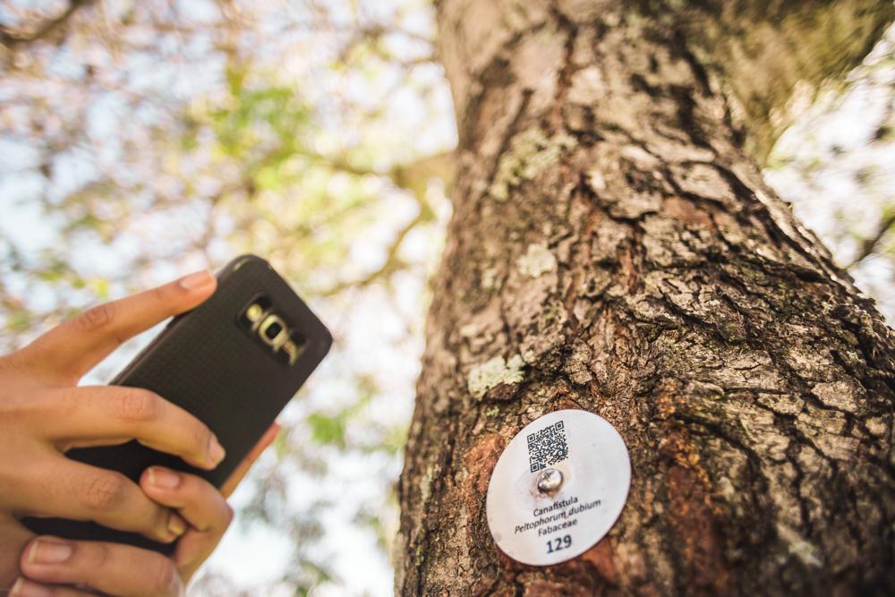 A foto mostra o tronco de uma árvore com uma pequena placa circular de fundo branco contendo um QR code. À esquerda, a mão de uma pessoa de pele branca segura um celular preto com a câmera voltada para a placa. Ao fundo, o céu azul claro e as ramificações da árvore.