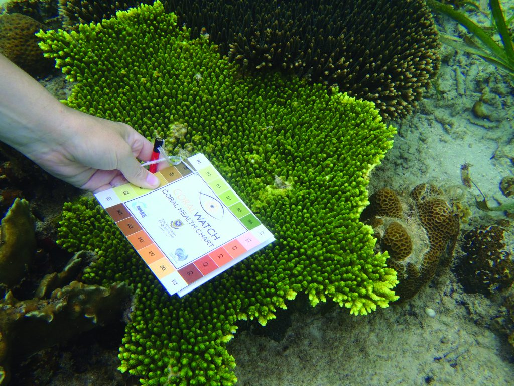 the photo shows a hand, in the sea bottom, holding the Coral Watch ChartWatch, where there is a graduation of colors. In the background, a coral of green color
