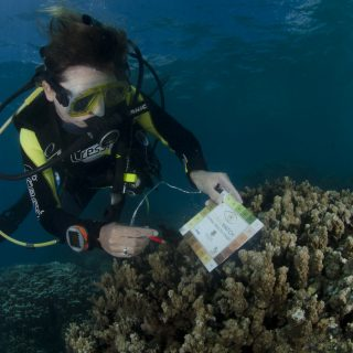 diver on the blue sea background with a Coral Watch card analyzing the corals. Below it, a set of whitish corals