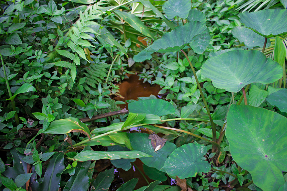 A close-up of leaves and plants and, passing through, a small stream.