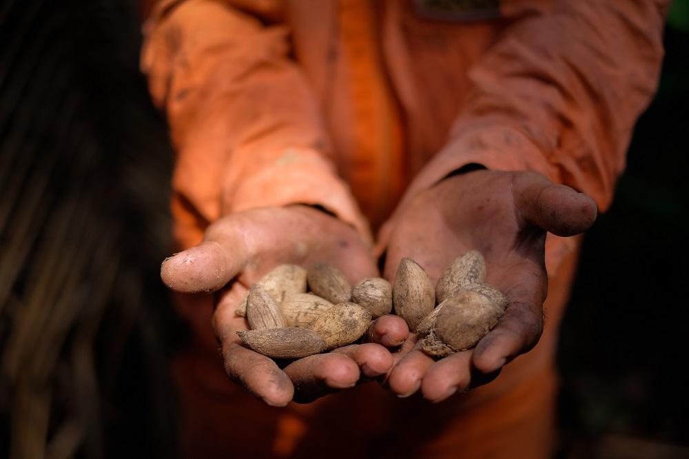 La imagen muestra, en un plano cerrado, las manos abiertas de un hombre de piel morena, un poco sucio de tierra, sosteniendo semillas de color marrón claro. Sólo las manos están en foco; al fondo aparece (fuera de foco) parte de la ropa naranja que lleva este hombre.