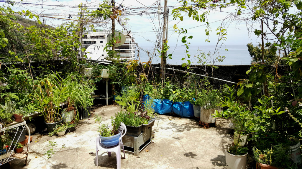 A terrace crowded with green plants, some growing in pots and some on overhead vines. In the background, pale blue sky and a glimpse of the ocean.