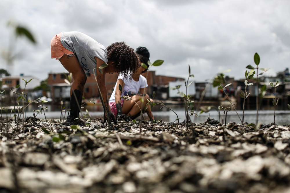 A black, curly-haired girl crouches, planting a seedling in the mangrove. Her hands and legs are covered with mud, and several seedlings are already planted just ahead of her. Beside her, another young woman crouches, also planting.