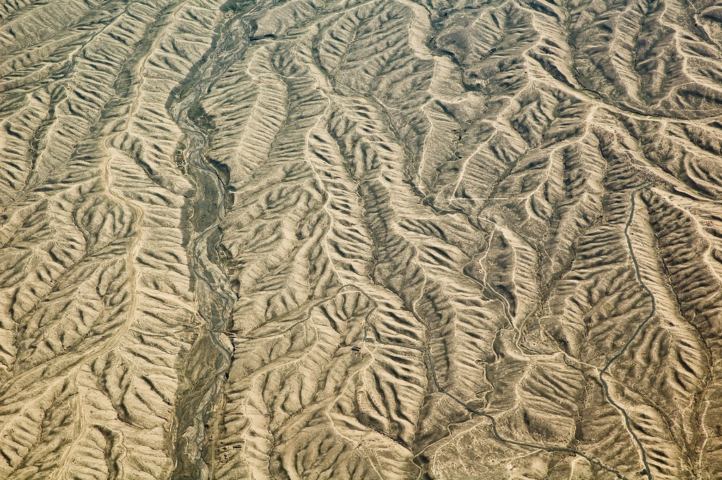 An aerial photo of a desert with sand dunes in wavy shapes forming what looks like a drawing of the leaves from trees.