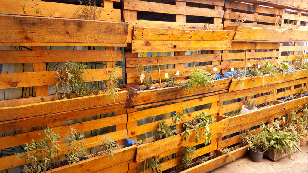 The photo shows a wall made of pallets. Several rectangular boxes are attached to it, supporting small home gardens.