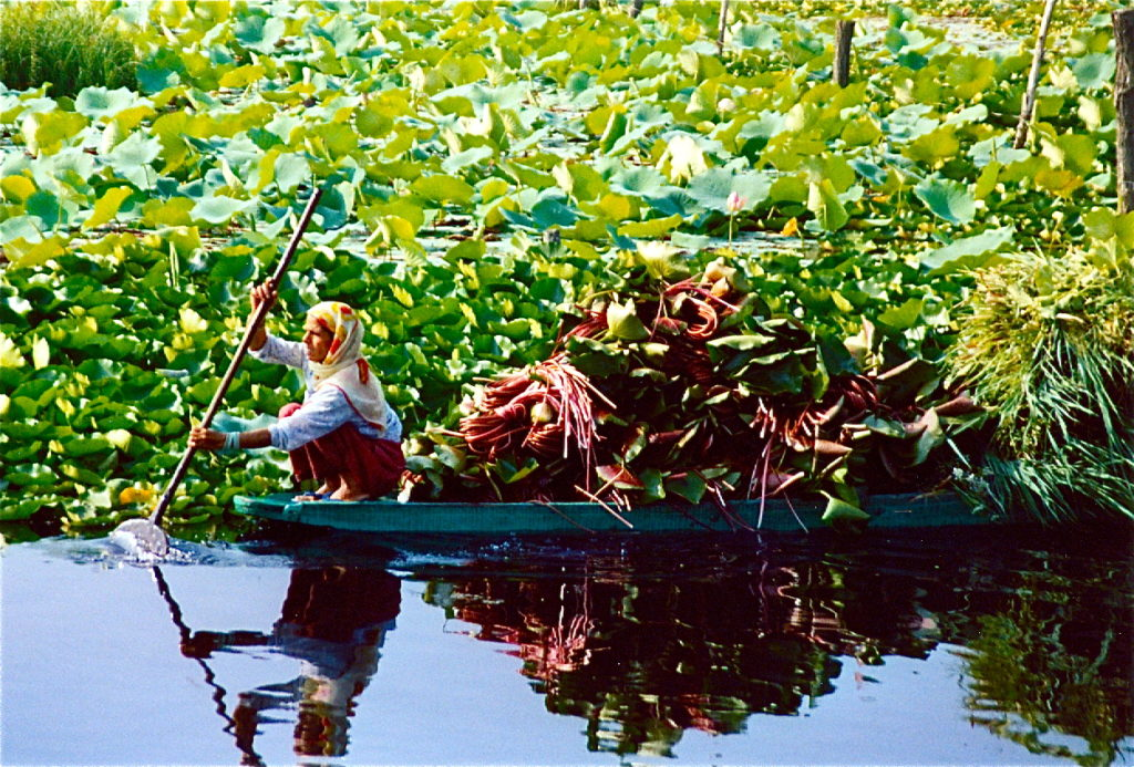 A woman, dressed in a long brown skirt, white blouse and a yellow and red headscarf, is paddling a blue canoe. She is seated at one end of the boat. The canoe is loaded up with a bundle of green leaves and dark gray roots. The woman and her canoe seem to be emerging out of a cluster of leafy green plants that looms over, and is reflected in, the dark blue water.