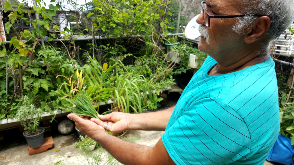 A man, over 70 years old, with white hair and a mustache. He is wearing black-rimmed spectacles and a blue short-sleeved shirt. He is standing up in the right corner of the image, showing off some spices. There are many potted plants behind him.