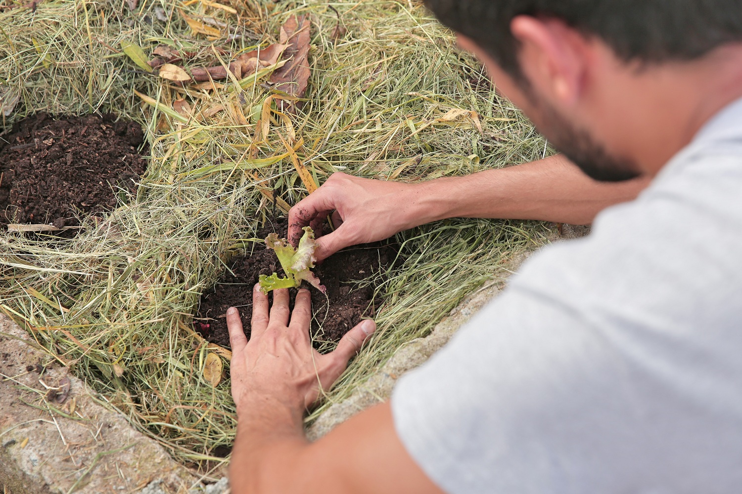 A view from above, in close-up, of a man planting a seedling in a mound of dark soil, surrounded by grass. The picture shows only part of his back and arms, as well as the back of his neck and part of his face.