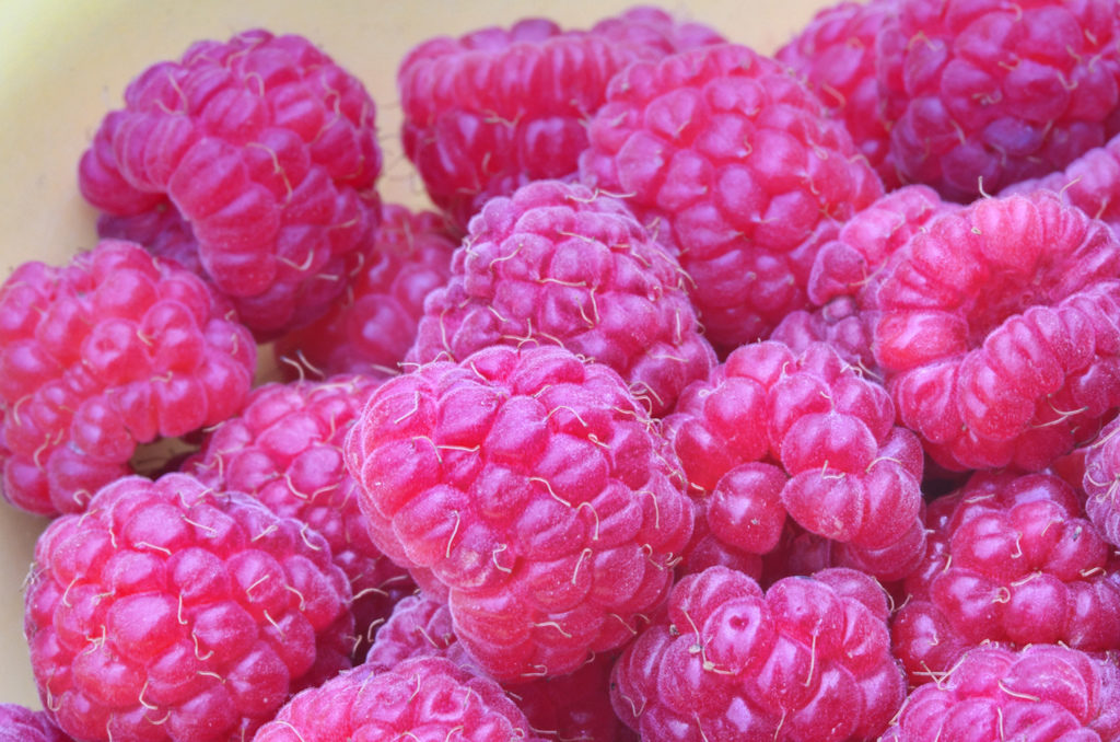 A close-up of very ripe and lightly frozen raspberries.