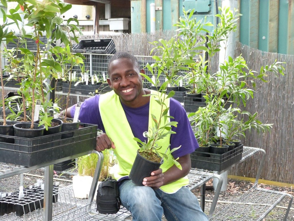 A black man, his hair almost completely shaved, is wearing jeans, a purple T-shirt and a green vest. In his left hand, he holds a seedling in a temporary, plastic planter and smiles at the camera. He is sitting on a metal structure among rows of seedlings.