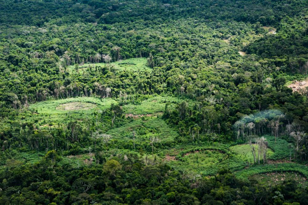 Imagem aérea de uma floresta muito fechada, onde há alguns espaços abertos onde aparecem plantações circulares