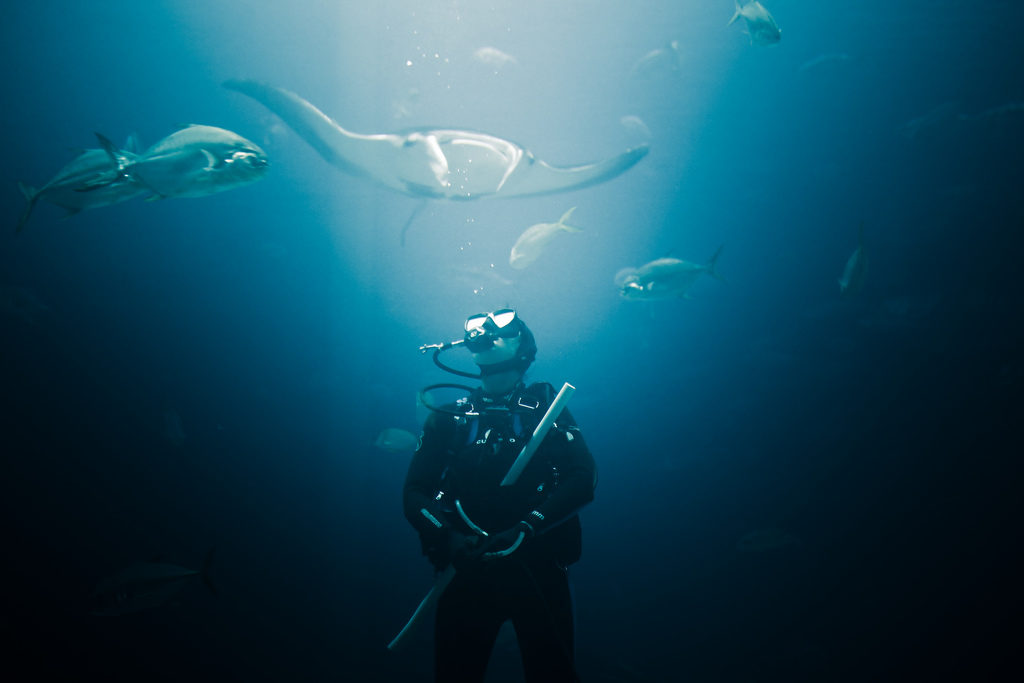 At the bottom of the sea, surrounded by silver colored fish, a man facing the camera looks up, wearing diving goggles, breathing equipment and a black diving suit that covers his whole body. He is holding some equipment in front of his chest. Above his head, a white and gray manta ray is swimming towards the camera.