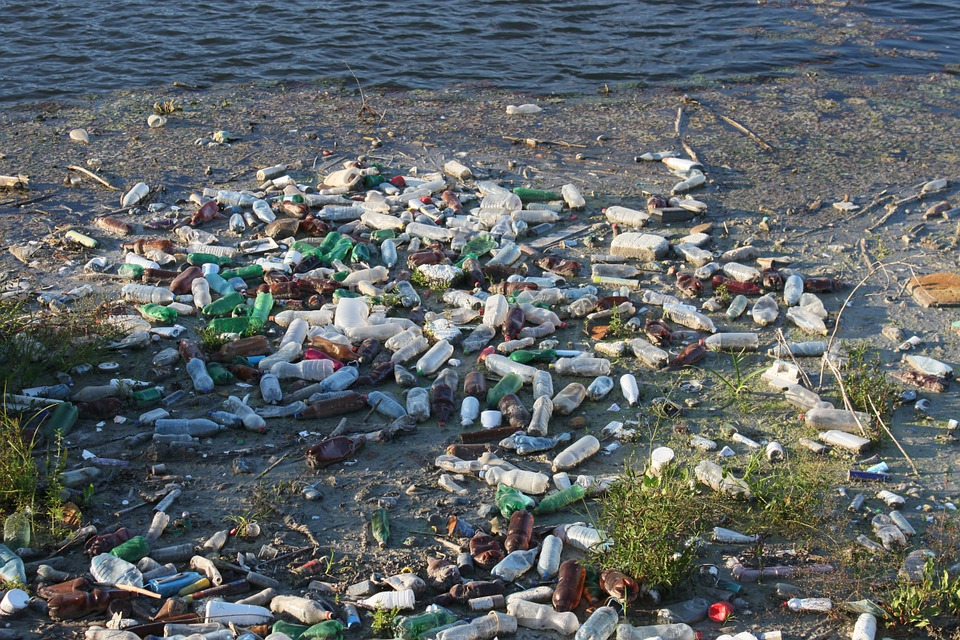 The shore of a lake or river littered with glass and plastic bottles. Some plants sprout from between the garbage. In the background is a swath of blue water.